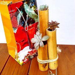 Terrario Bambú